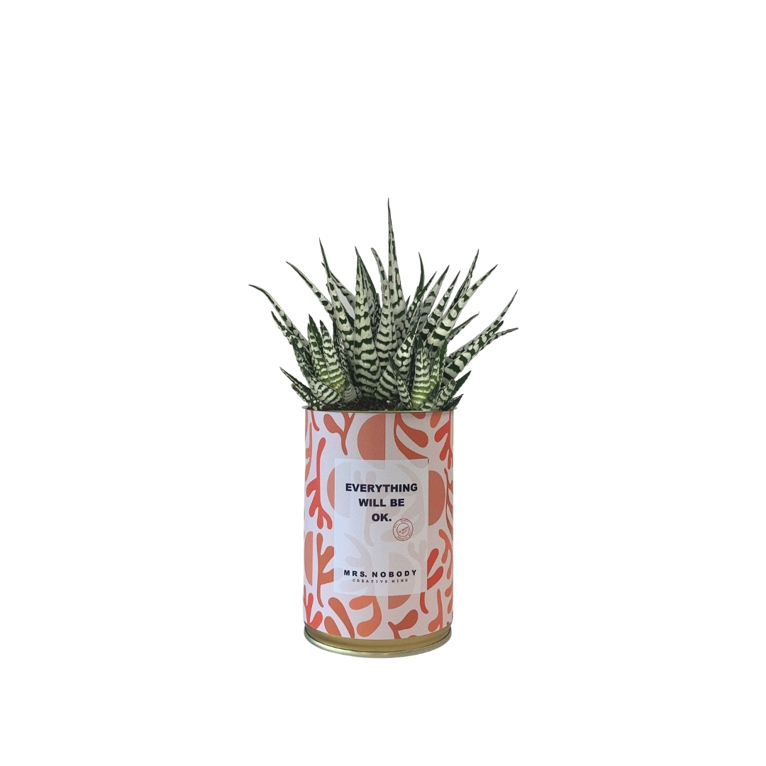 Cactus ou Succulente - Everything Will Be Ok - Haworthia