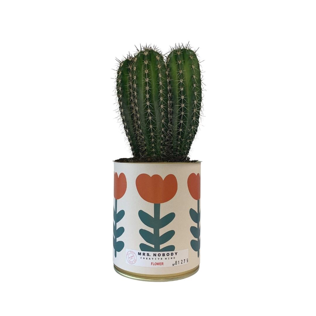 Cactus ou Succulente - Flower - Cactus Colonne