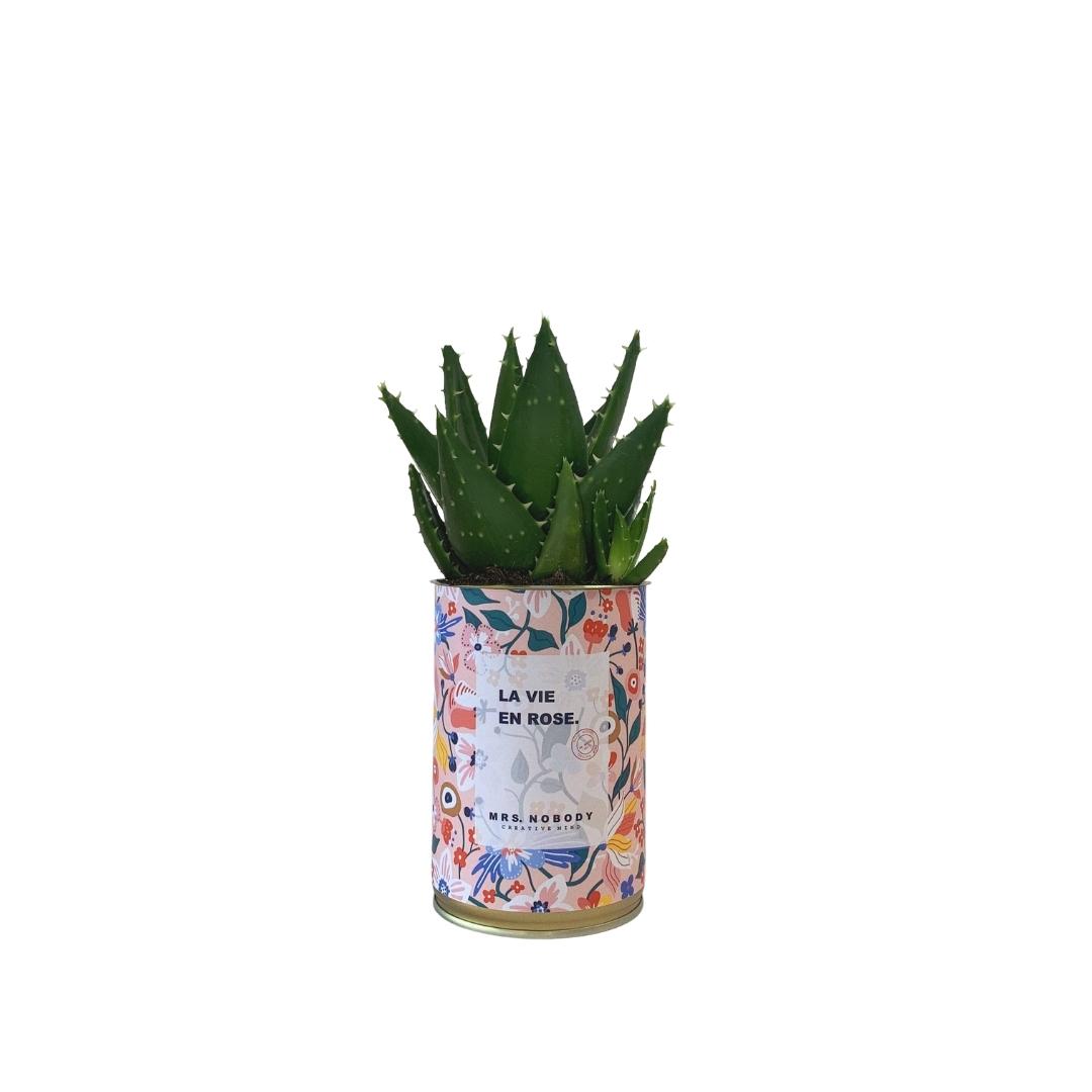 Cactus ou Succulente - La Vie En Rose - Aloe