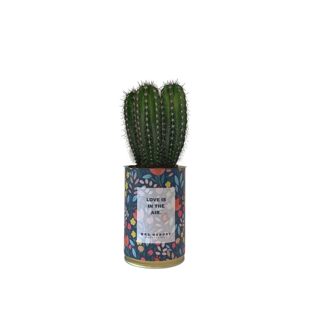 Cactus ou Succulente - Love is in the Air - Cactus Colonne