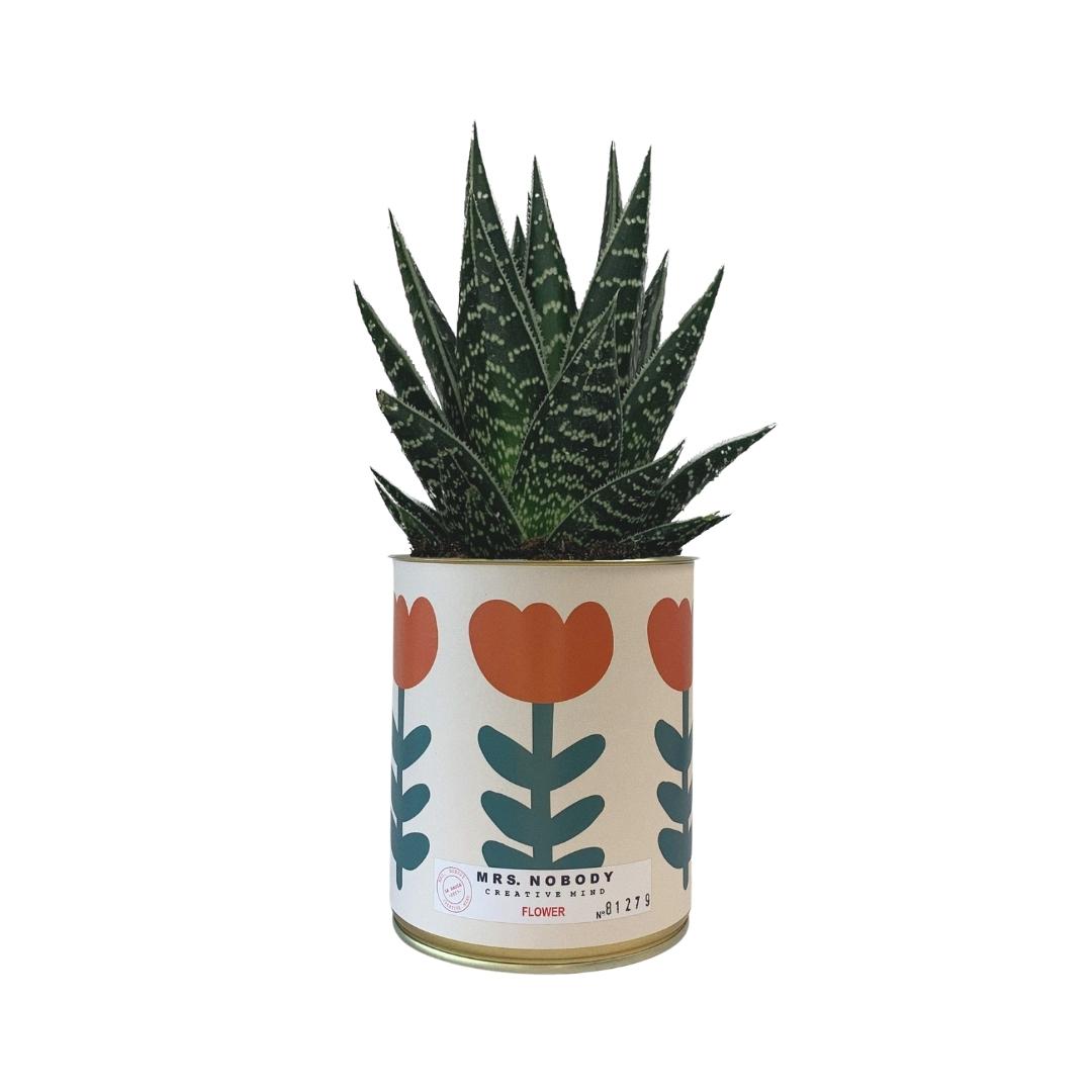 Cactus ou Succulente - Flower - Aloe