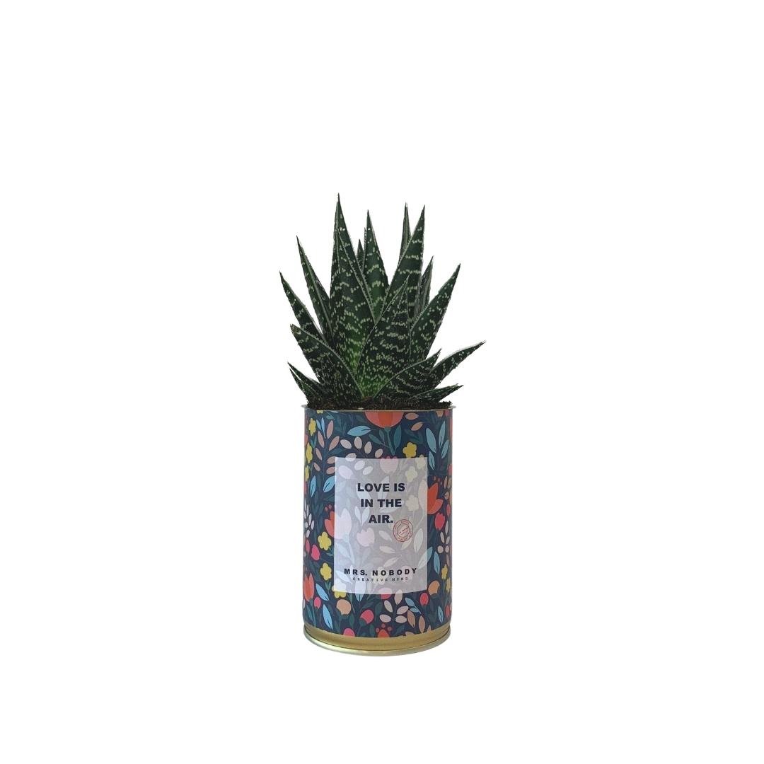 Cactus ou Succulente - Love is in the Air - Aloe