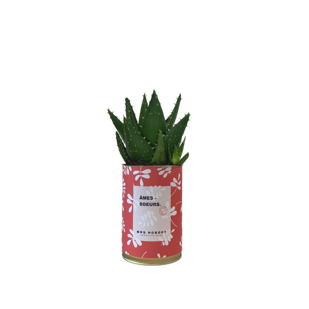 Cactus ou Succulente - Âmes-Sœurs - Aloe