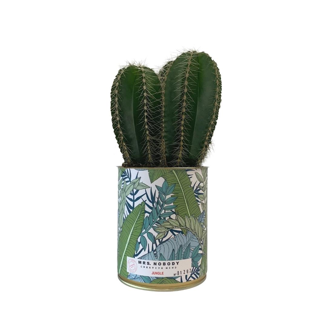 Cactus ou Succulente - Jungle - Cactus Colonne