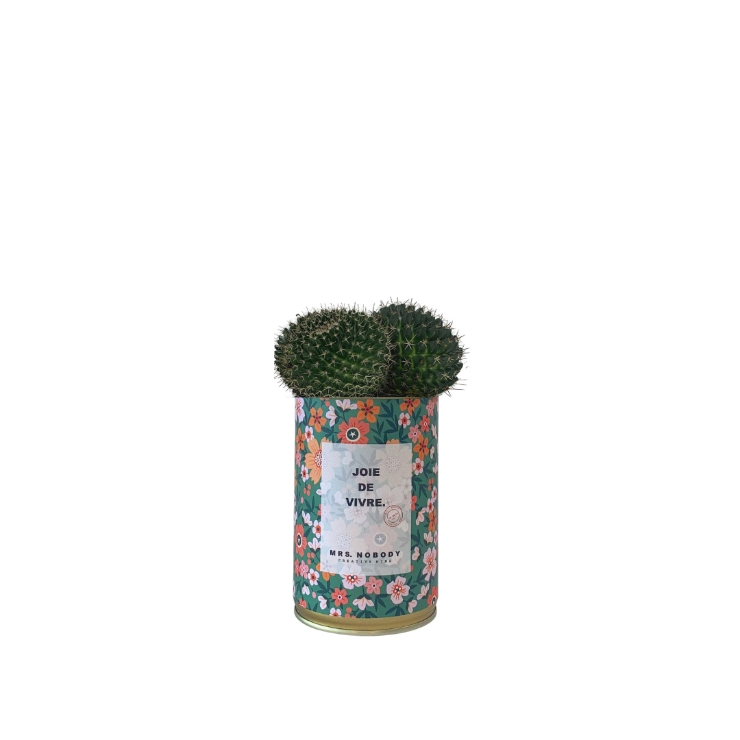 Cactus ou Succulente - Joie De Vivre - Cactus Boule