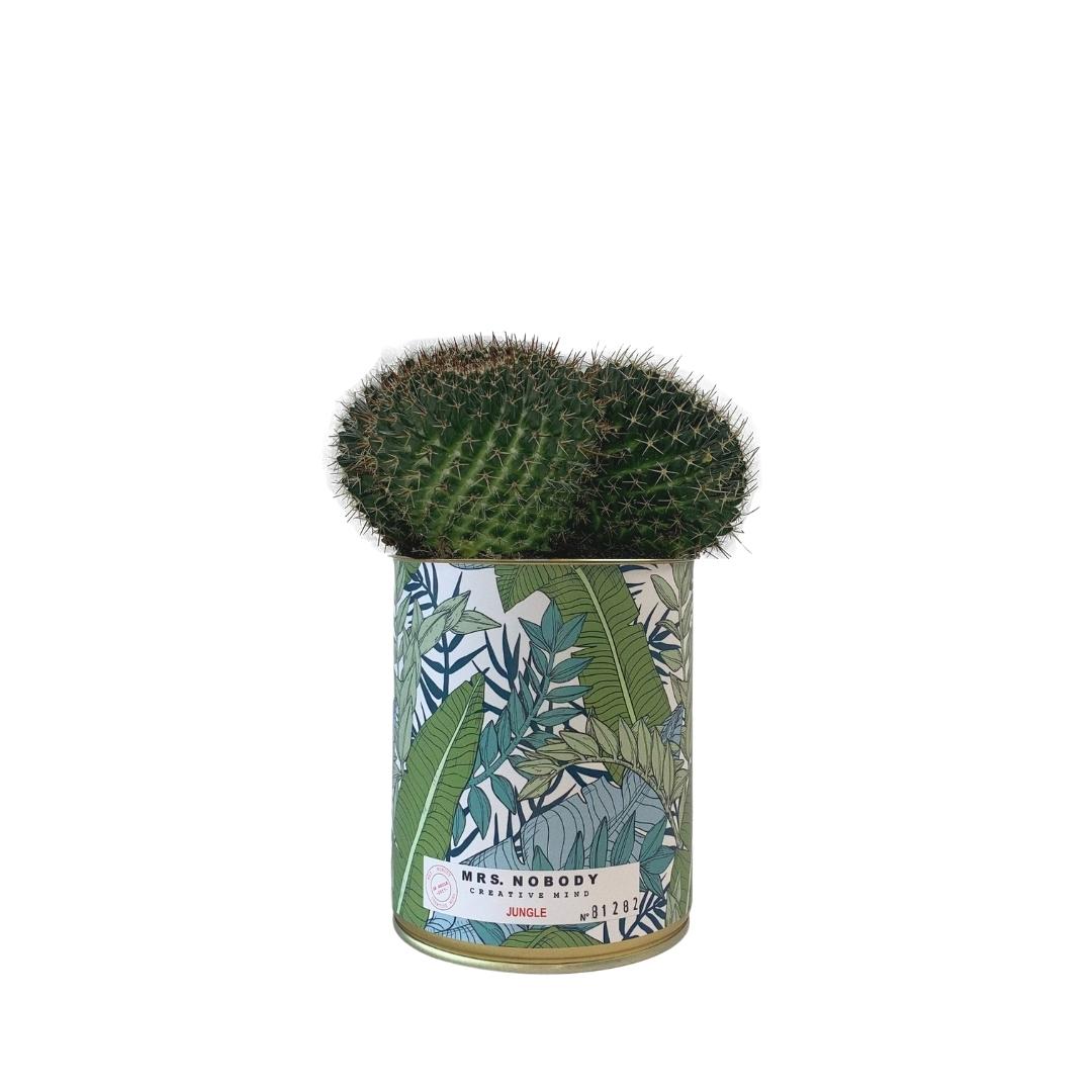 Cactus ou Succulente - Jungle - Cactus Boule