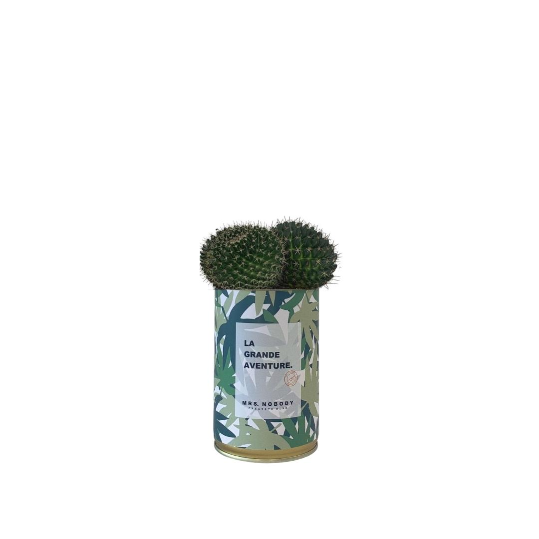 Cactus ou Succulente - La Grande Aventure - Cactus Boule