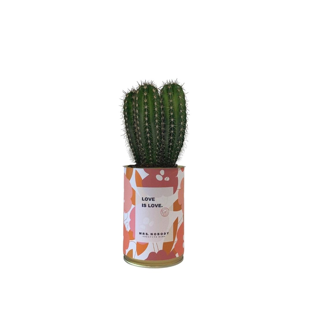Cactus ou Succulente - Love is Love - Cactus Colonne