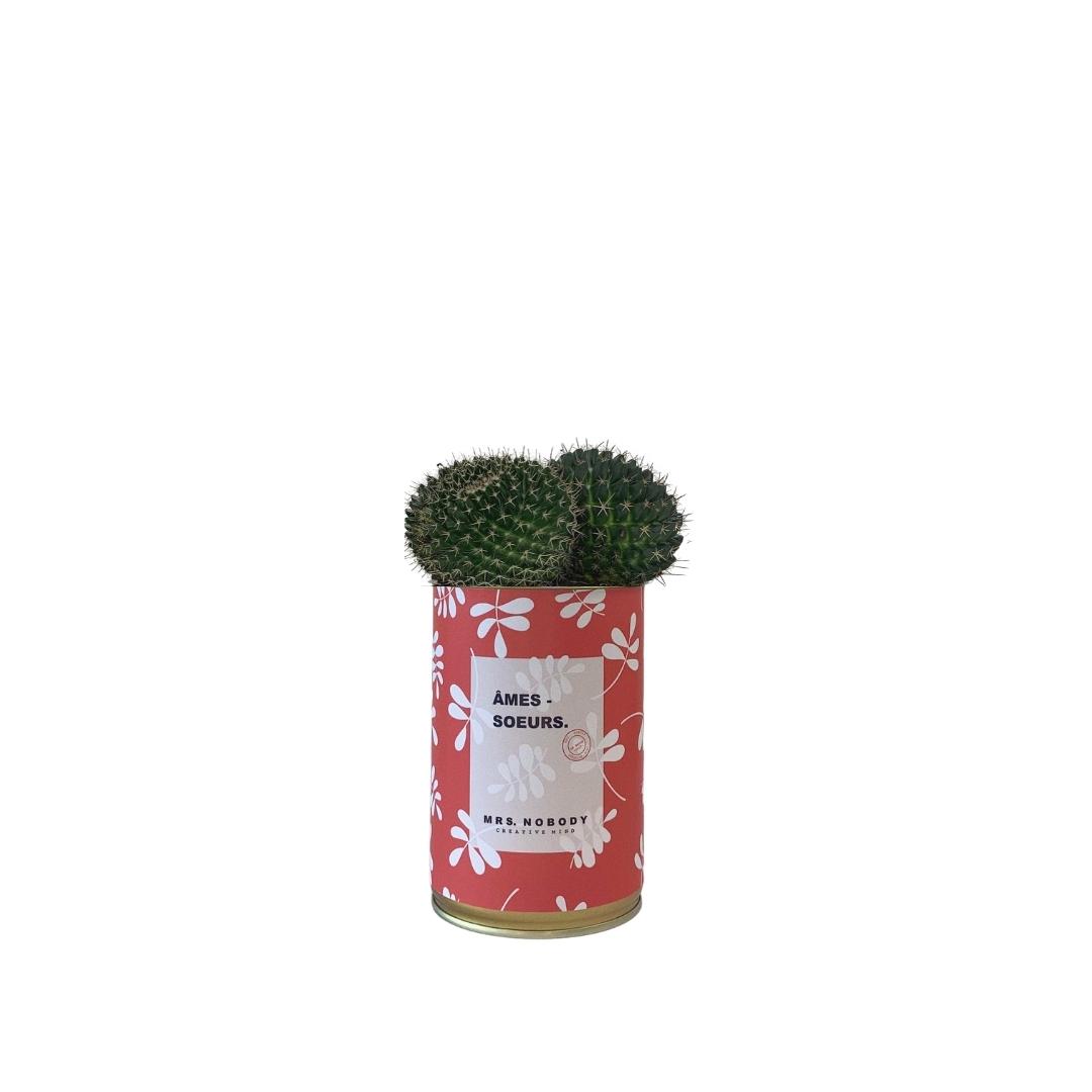 Cactus ou Succulente - Âmes-Sœurs - Cactus Boule