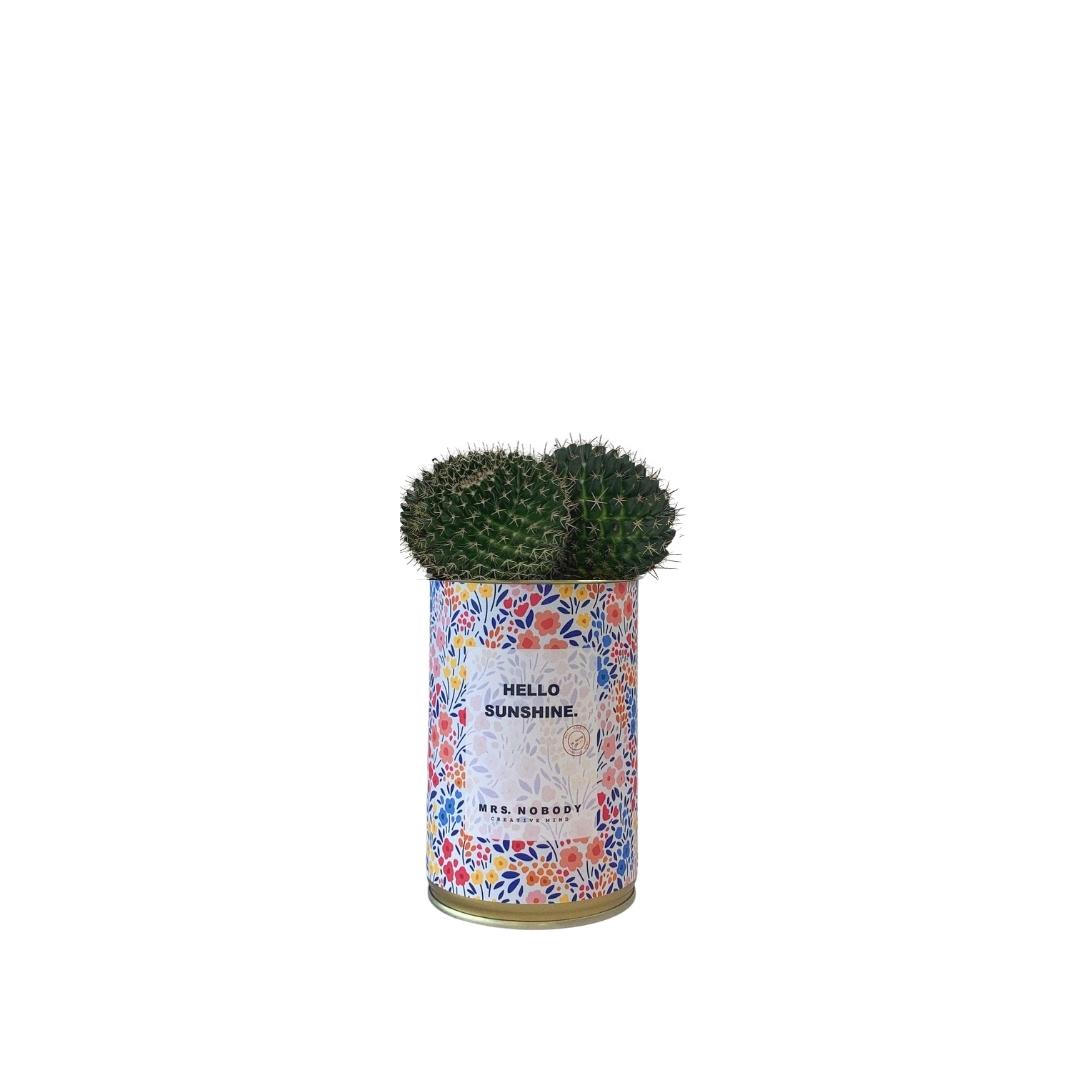 Cactus ou Succulente - Hello Sunshine - Cactus Boule