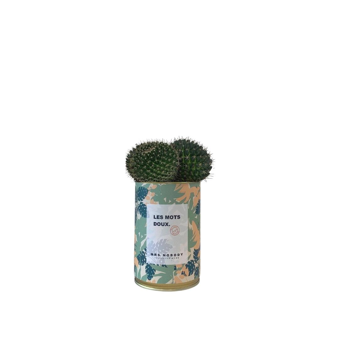 Cactus ou Succulente - Les Mots Doux - Cactus Boule