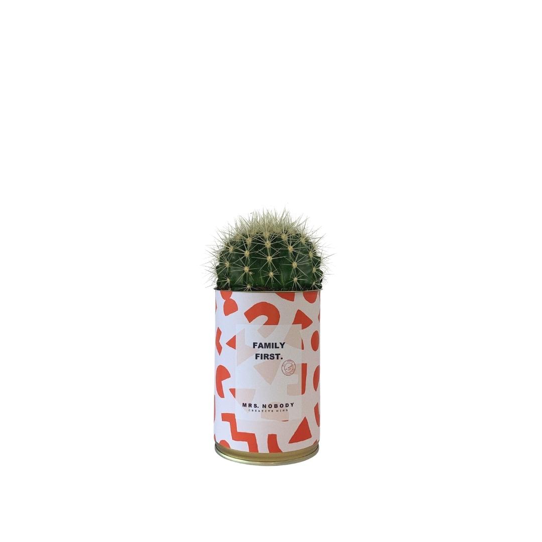 Cactus ou Succulente - Family First - Cactus Boule