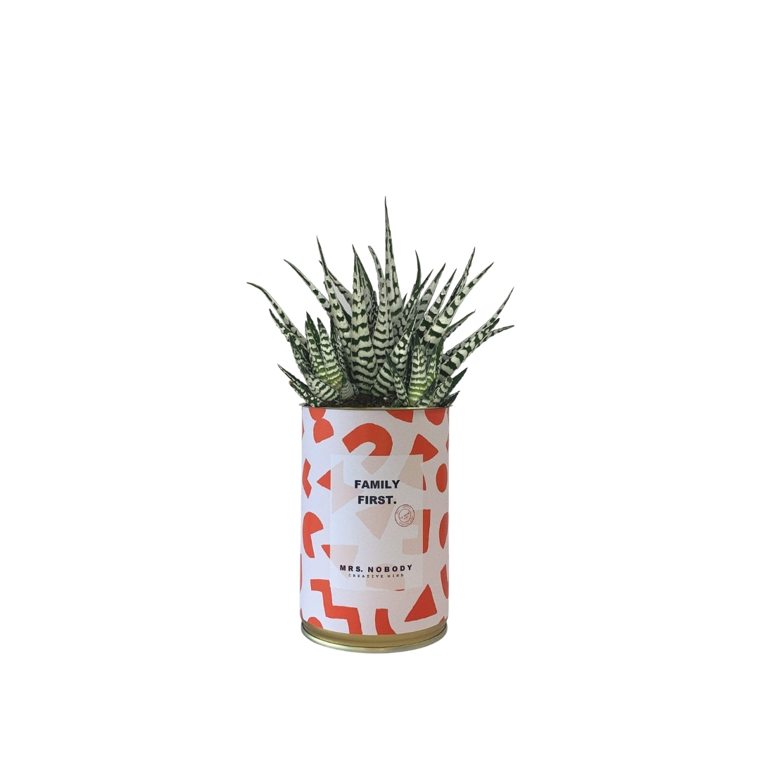 Cactus ou Succulente - Family First - Haworthia