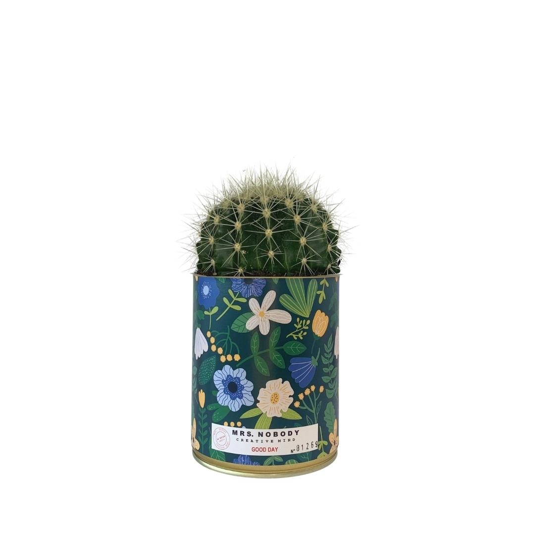 Cactus ou Succulente - Good Day - Cactus Boule