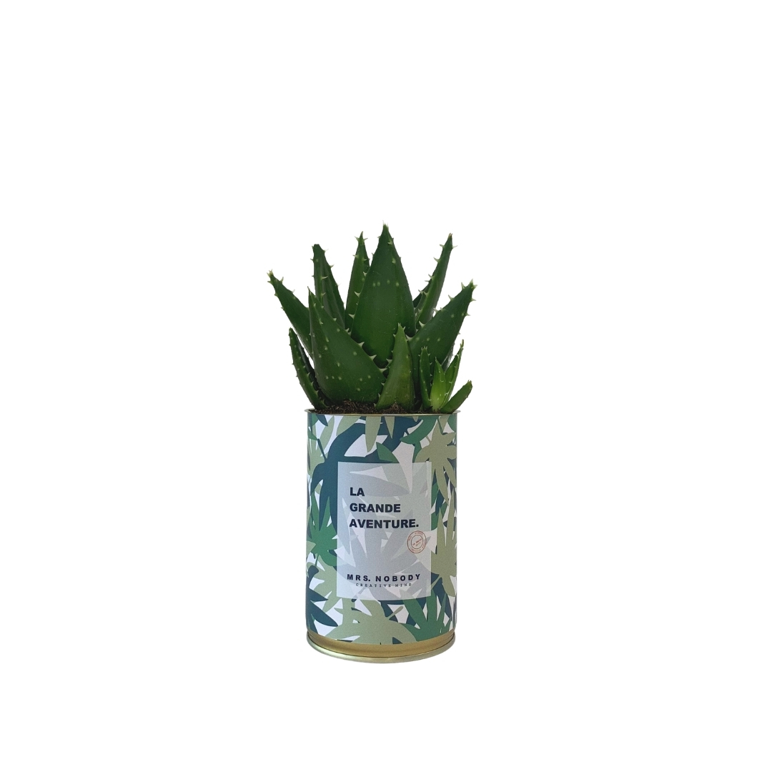 Cactus ou Succulente - La Grande Aventure - Aloe