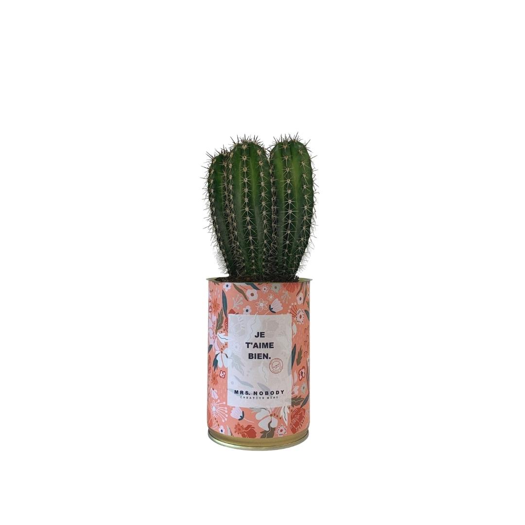 Cactus ou Succulente - Je T'aime Bien - Cactus Colonne
