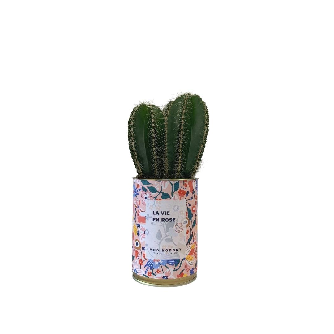 Cactus ou Succulente - La Vie En Rose - Cactus Colonne