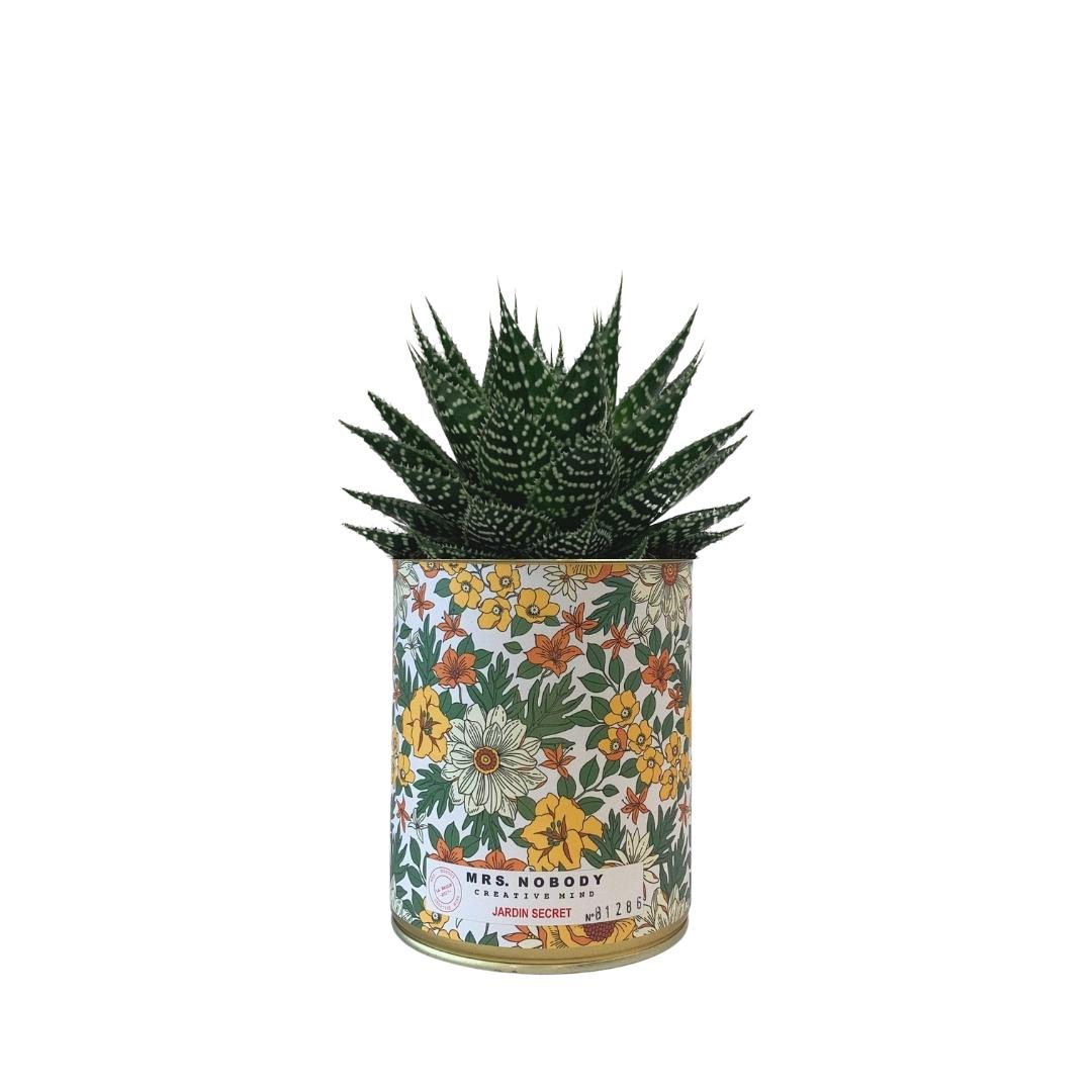 Cactus ou Succulente - Jardin Secret - Aloe