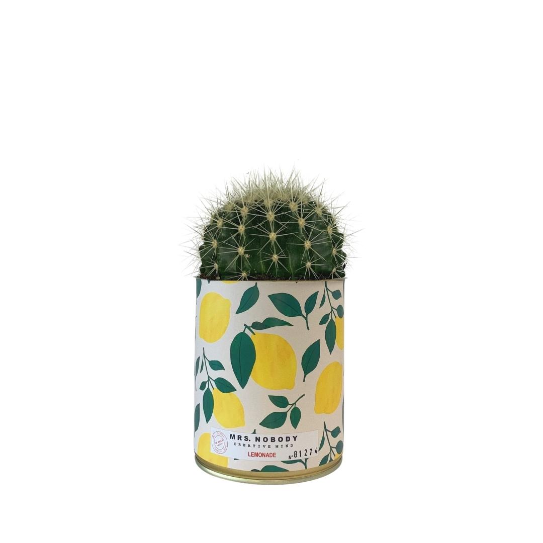 Cactus ou Succulente - Lemonade - Cactus Boule
