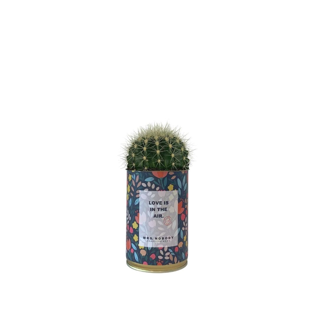 Cactus ou Succulente - Love is in the Air - Cactus Boule