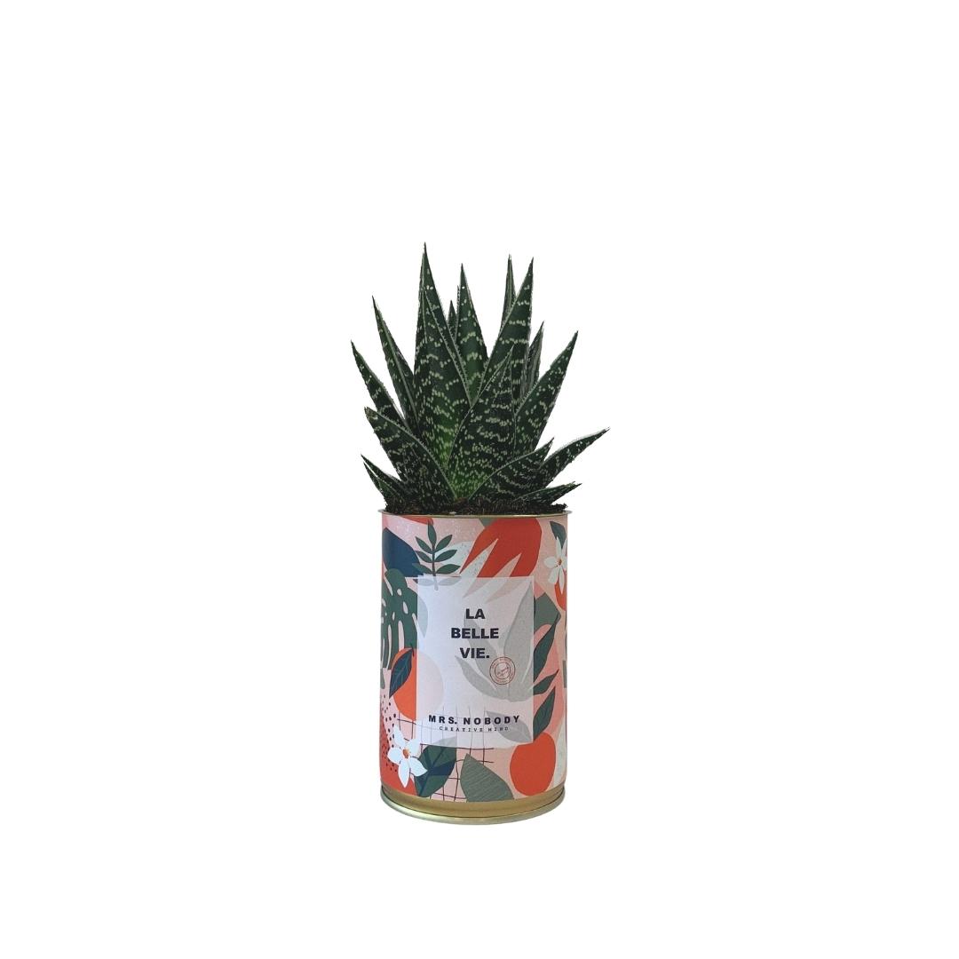 Cactus ou Succulente - La Belle Vie - Aloe
