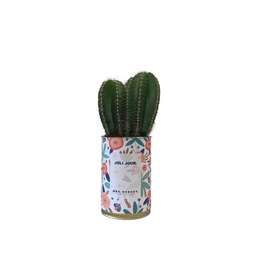 Cactus ou Succulente - Joli Jour - Cactus Colonne