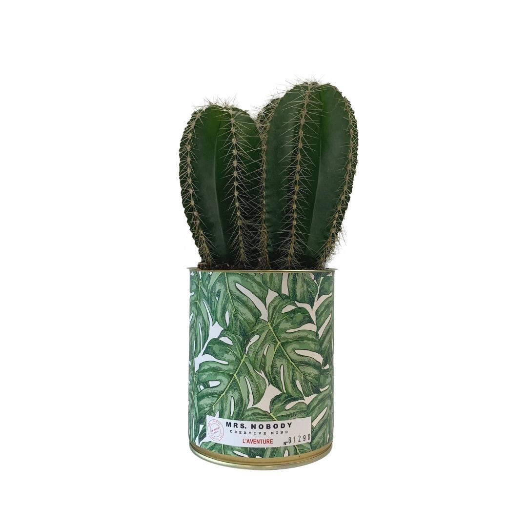 Cactus ou Succulente - L'Aventure - Cactus Colonne