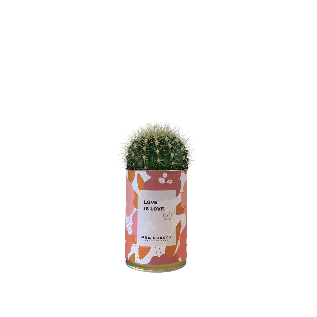 Cactus ou Succulente - Love is Love - Cactus Boule