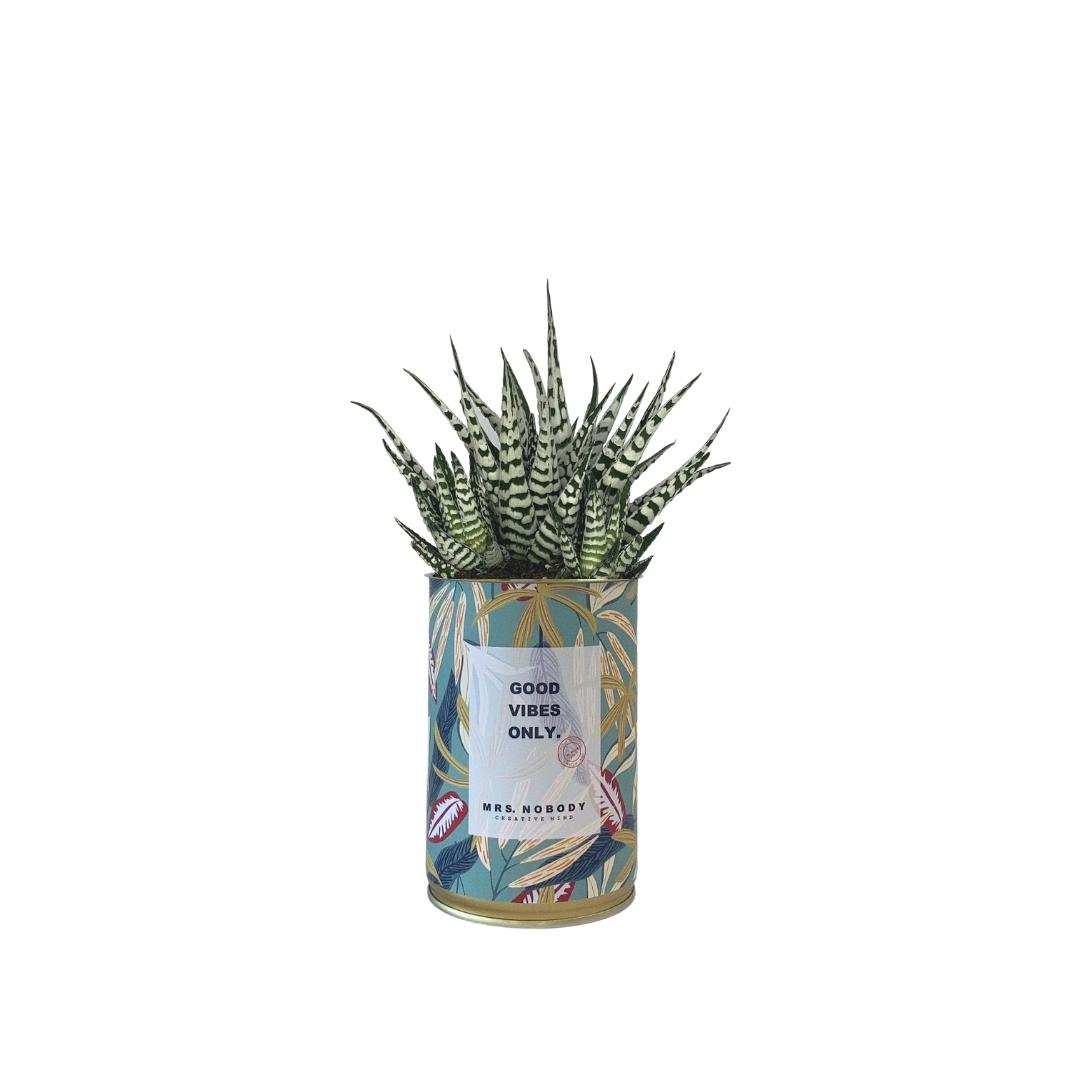 Cactus ou Succulente - Good Vibes Only - Haworthia