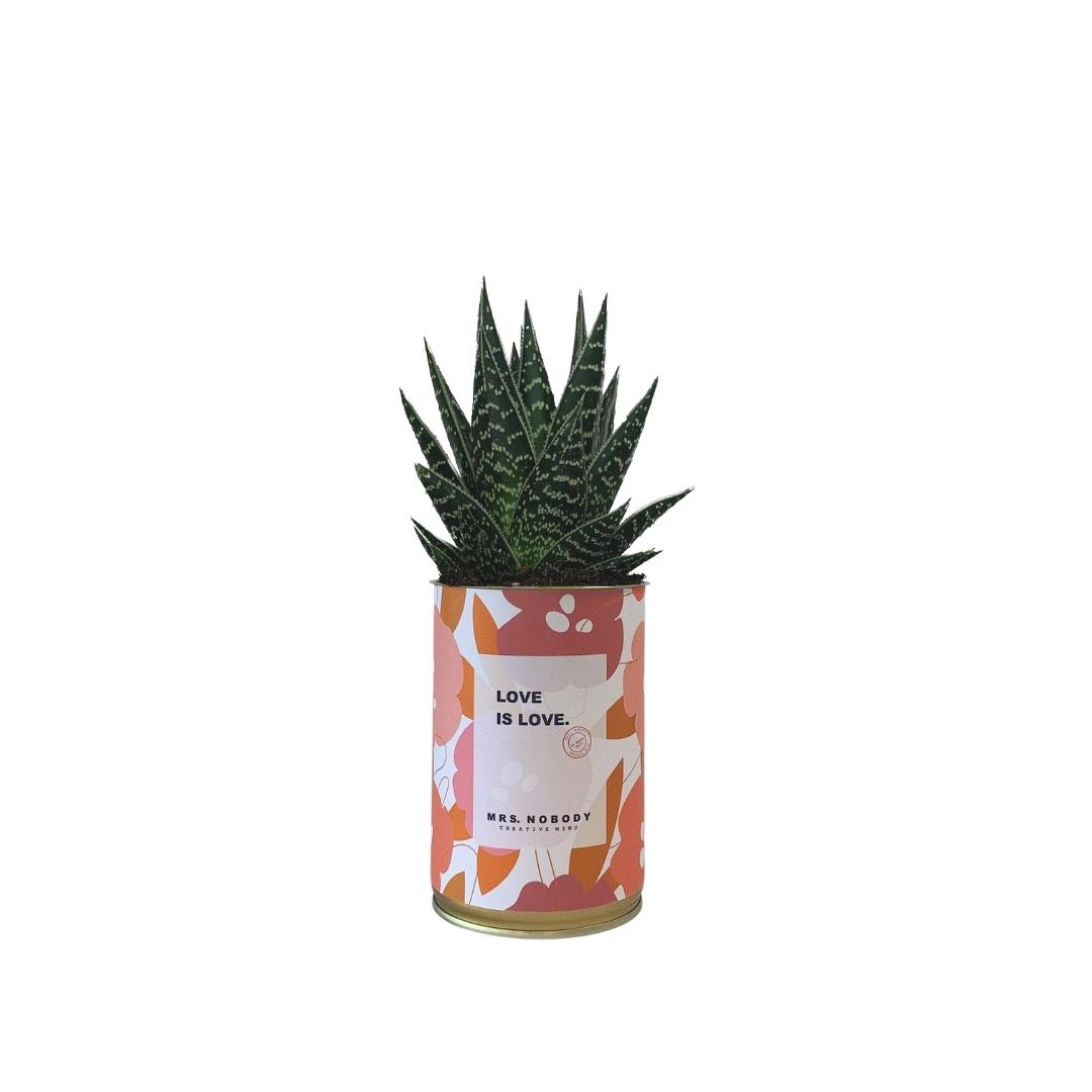 Cactus ou Succulente - Love is Love - Aloe
