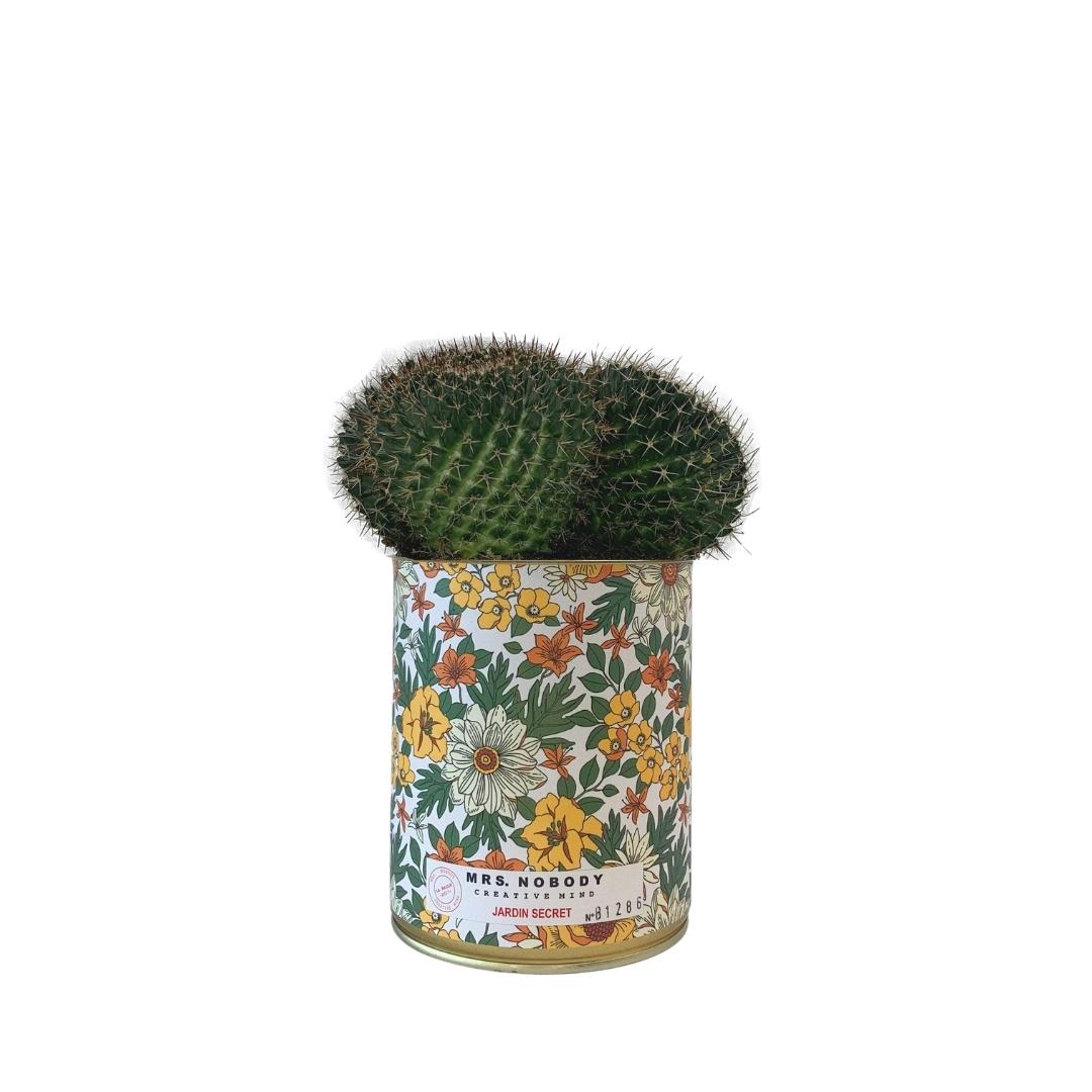 Cactus ou Succulente - Jardin Secret - Cactus Boule