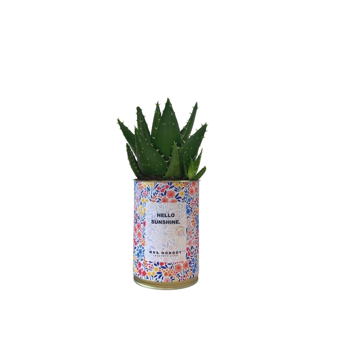 Cactus ou Succulente - Hello Sunshine - Aloe