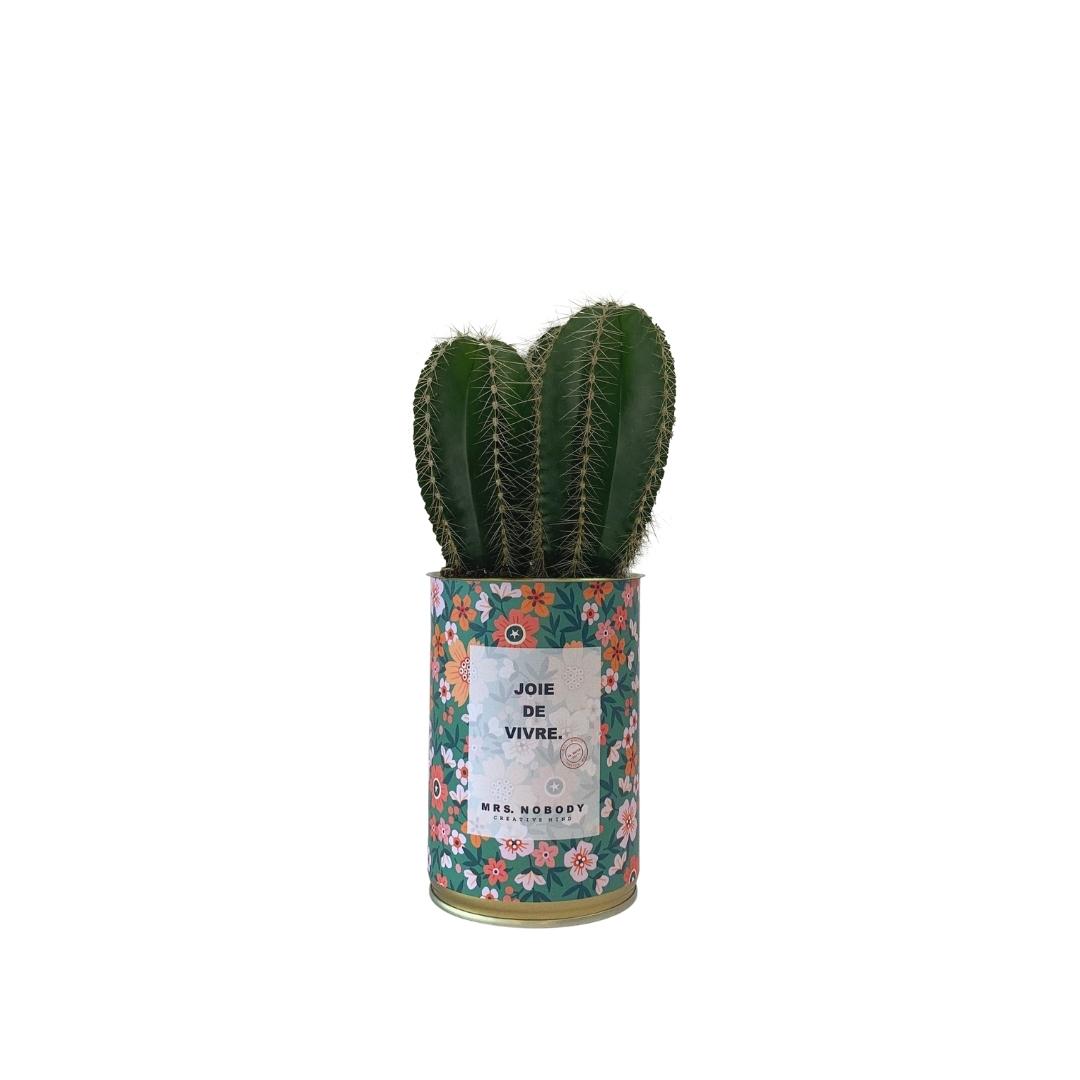 Cactus ou Succulente - Joie De Vivre - Cactus Colonne