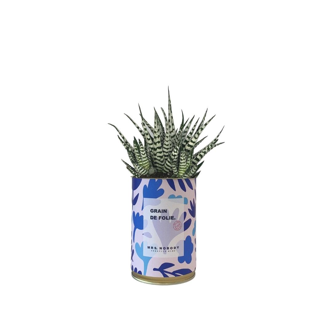 Cactus ou Succulente - Grain de Folie - Haworthia