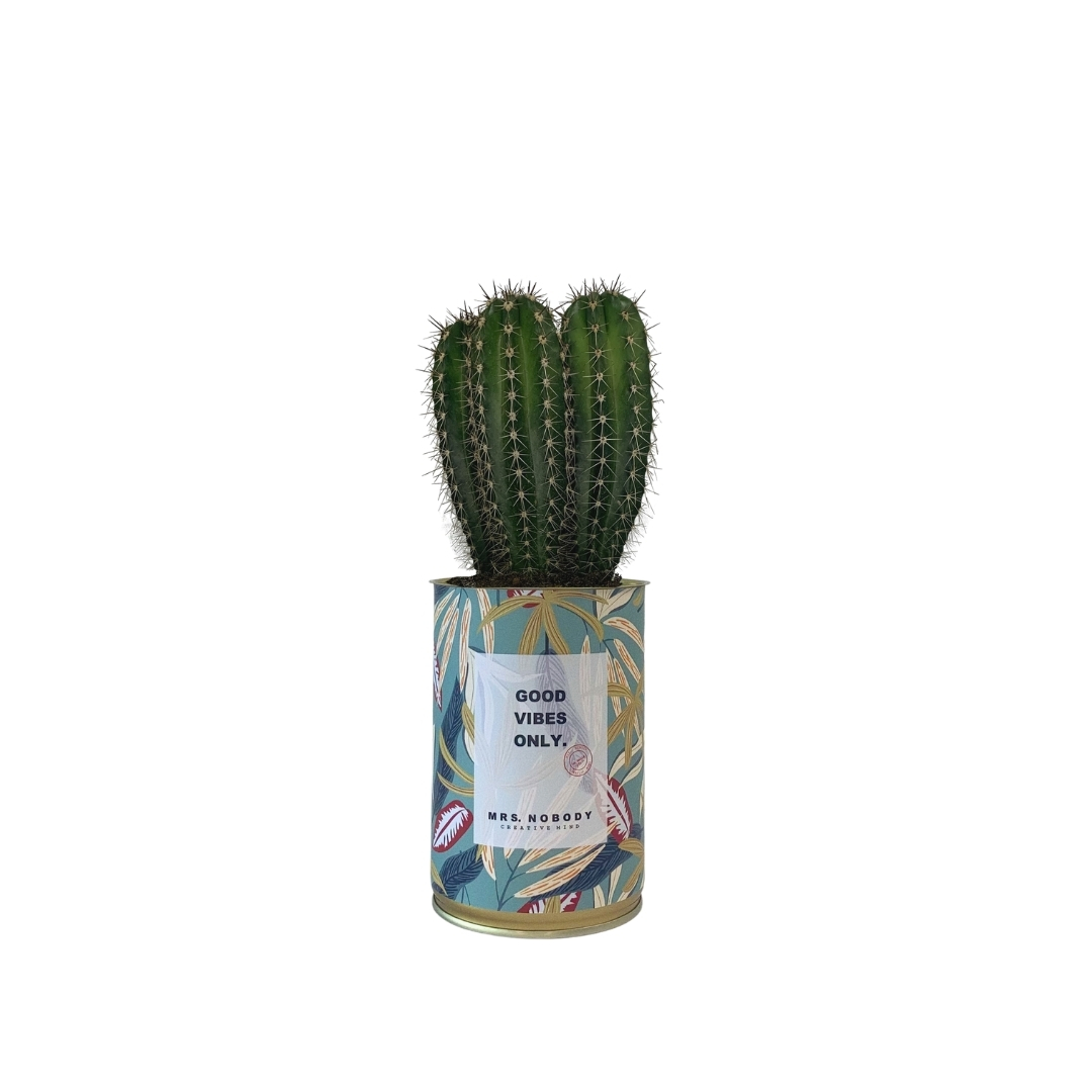 Cactus ou Succulente - Good Vibes Only - Cactus Colonne