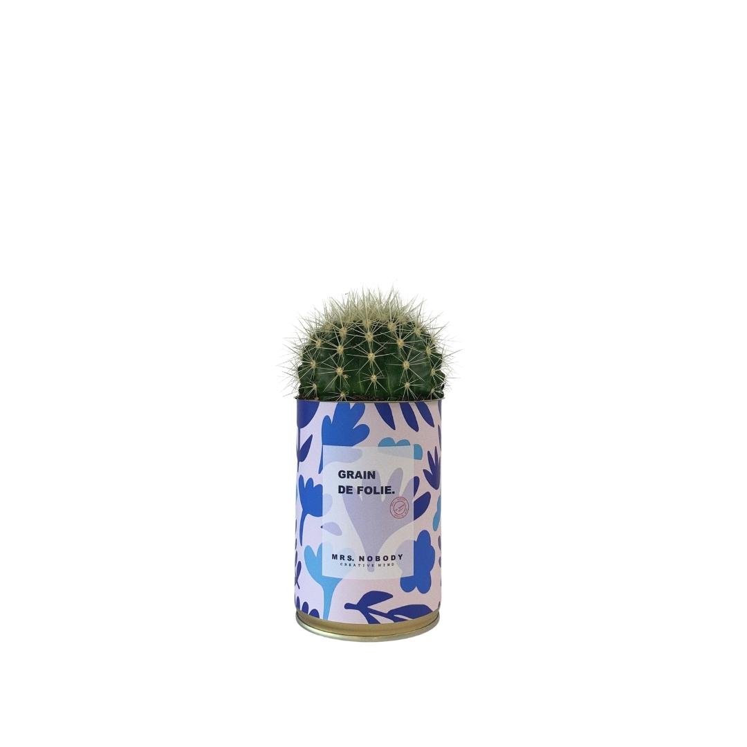 Cactus ou Succulente - Grain de Folie - Cactus Boule