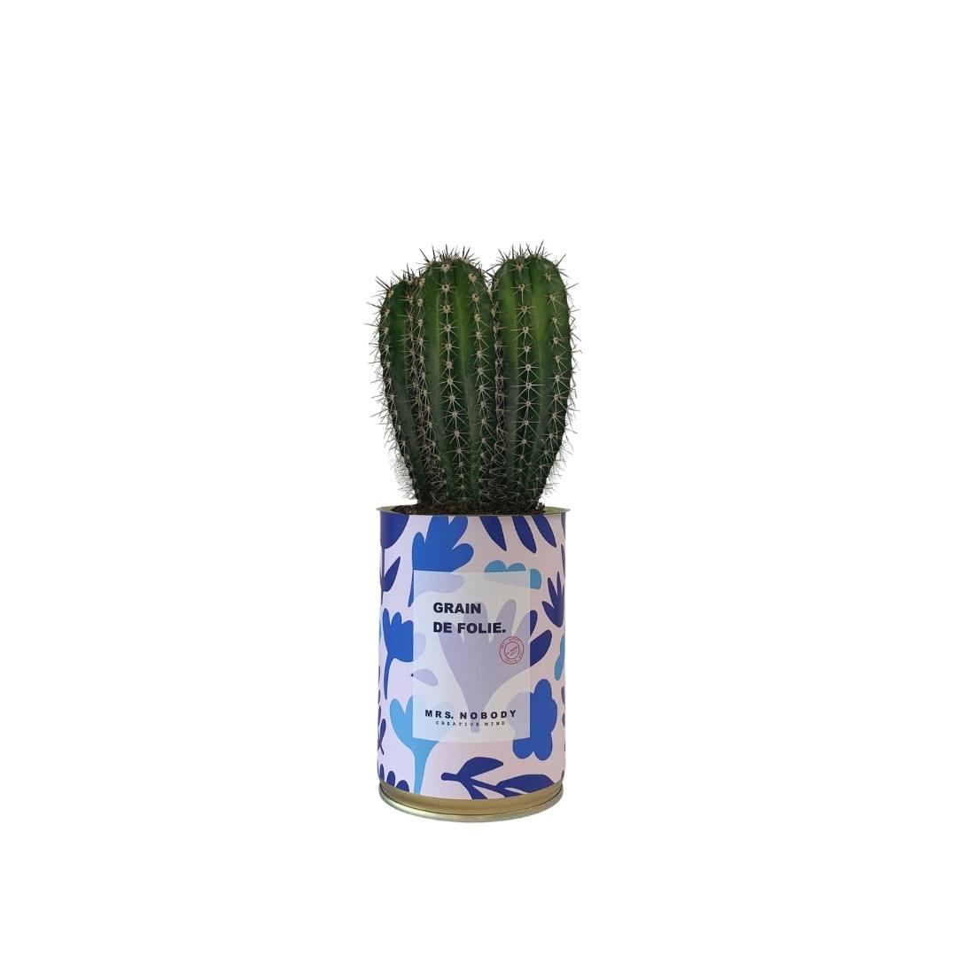 Cactus ou Succulente - Grain de Folie - Cactus Colonne