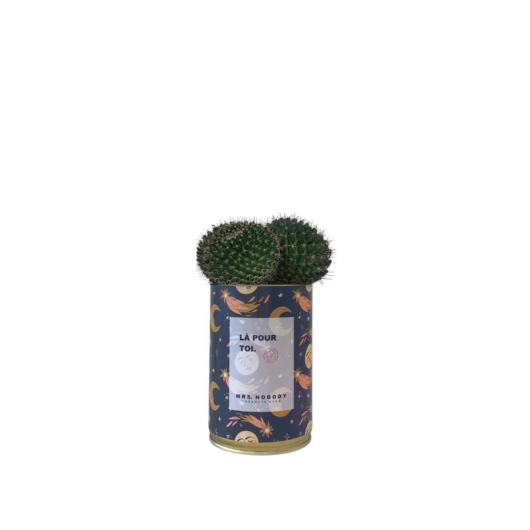 Cactus ou Succulente - Là Pour Toi - Cactus Boule