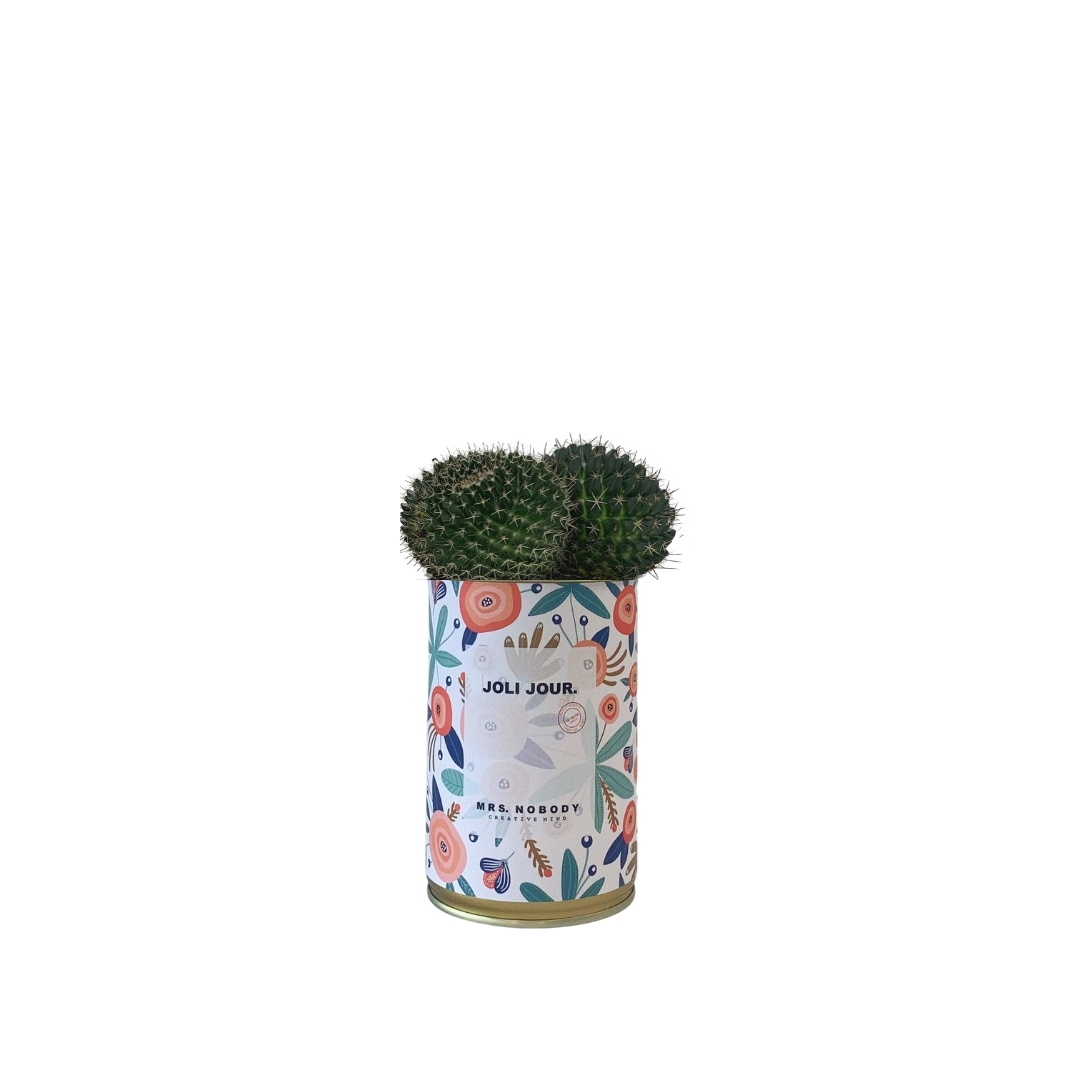 Cactus ou Succulente - Joli Jour - Cactus Boule
