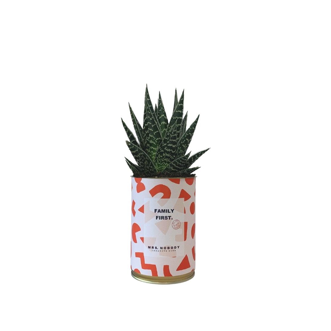 Cactus ou Succulente - Family First - Aloe
