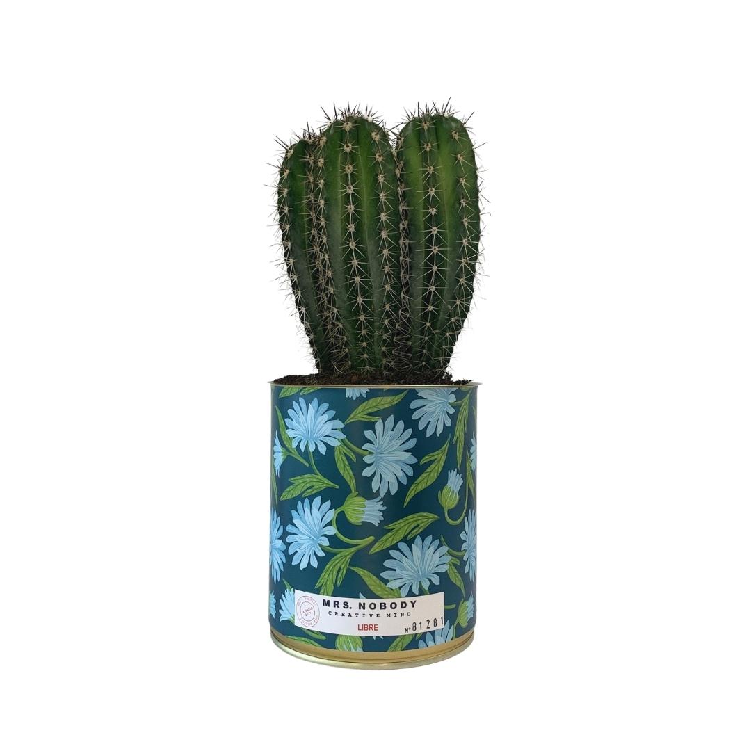 Cactus ou Succulente - Libre - Cactus Colonne
