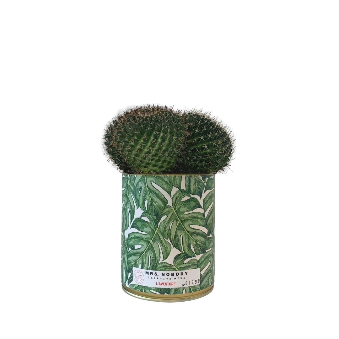 Cactus ou Succulente - L'Aventure - Cactus Boule