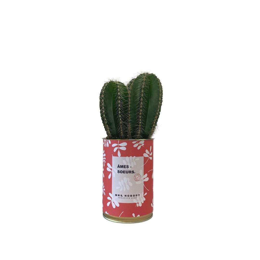 Cactus ou Succulente - Âmes-Sœurs - Cactus Colonne