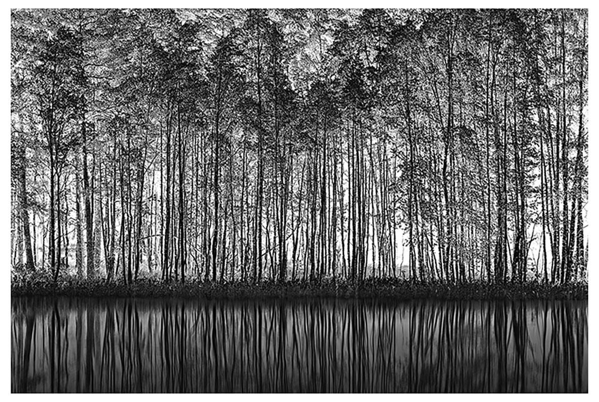 Affiche nature pointillisme Affiche seule
