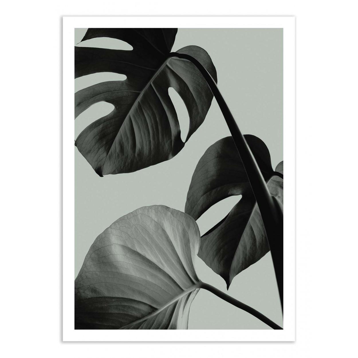 MONSTERA TEAL 7 - 1X STUDIO -  Affiche d'art 50 x 70 cm