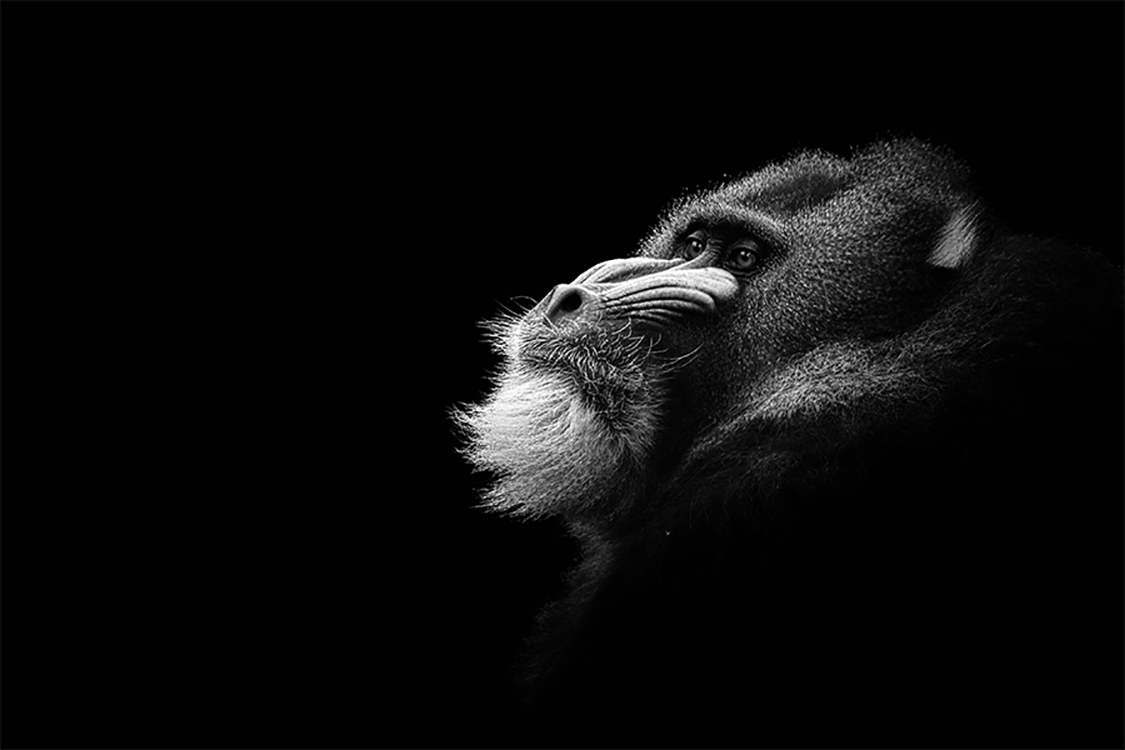 Photographie d'art de Guillaume Mordacq  60x90 cm sur alu