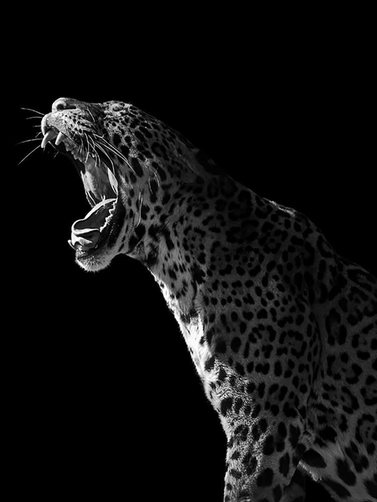 Photographie d'art de Guillaume Mordacq  45x60 cm sur plexi
