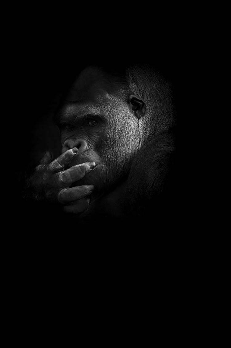Photographie d'art de Guillaume Mordacq 30x45 cm sur alu