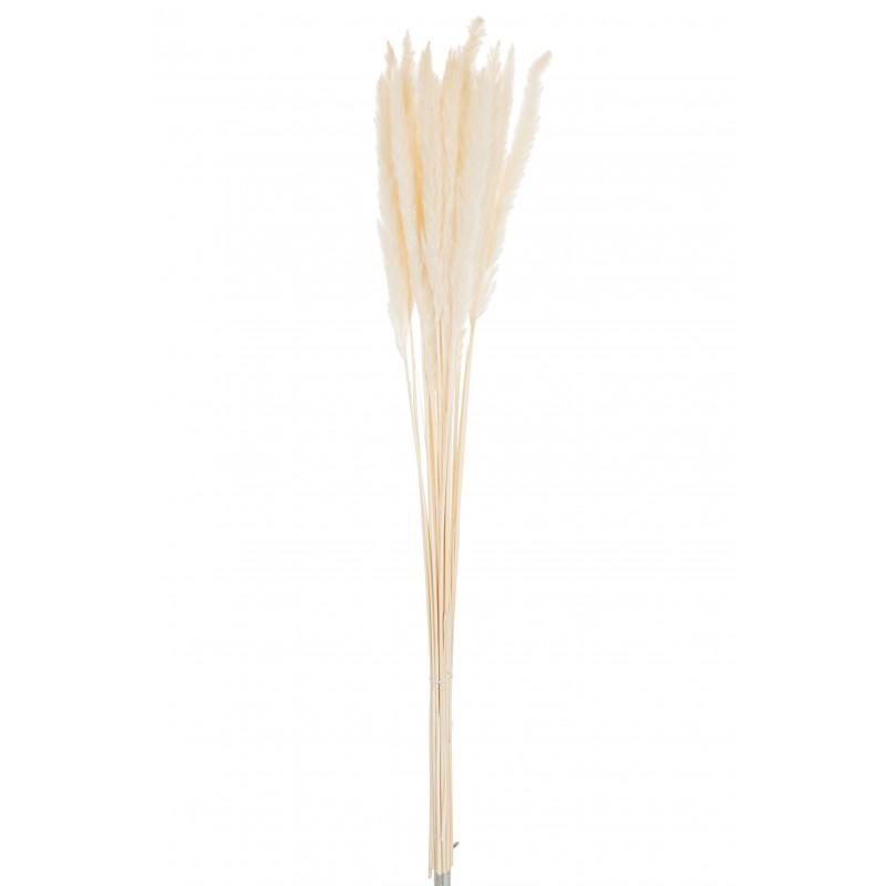Bouquet plumes fines miscanthus floridulus sèche crème H75cm