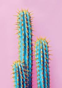 NATURE - Tableau métal cactus bleu 32x45